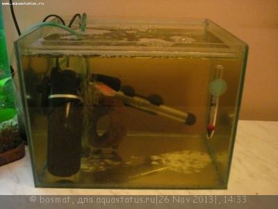 Карантин рыб в аквариуме - DSC04914.jpg