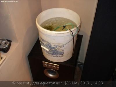 Карантин рыб в аквариуме - DSC01291.jpg