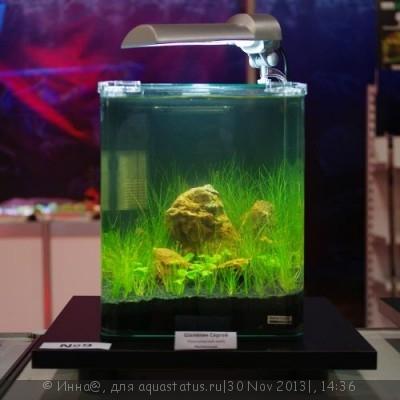 Аквариумные растения - опознание растений. - 009(1)-500x500.jpg