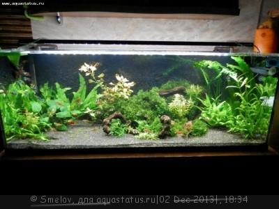 Мой аквариум 100 литров Smelov  - PC020675.JPG