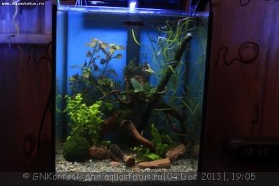 Аквариум акваэль куб 30 литров GNKontrol  - _MG_7237.JPG