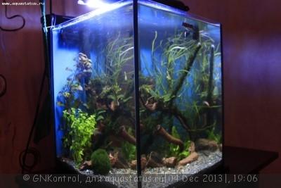 Аквариум акваэль куб 30 литров GNKontrol  - _MG_7240.JPG