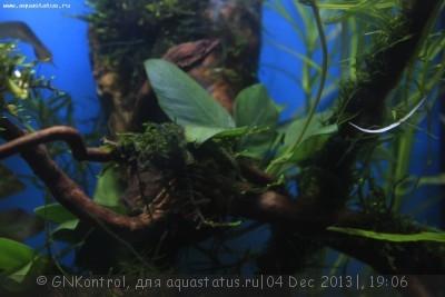 Аквариум акваэль куб 30 литров GNKontrol  - _MG_7244.JPG
