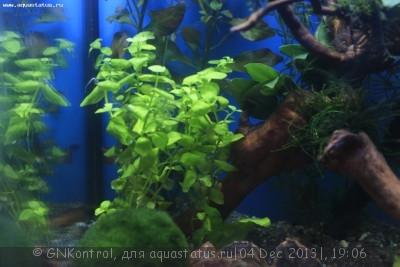 Аквариум акваэль куб 30 литров GNKontrol  - _MG_7246.JPG