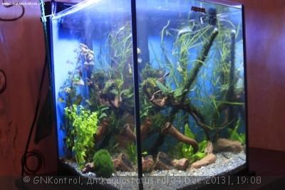 Аквариум акваэль куб 30 литров GNKontrol  - _MG_7250.JPG