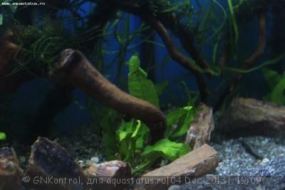 Аквариум акваэль куб 30 литров GNKontrol  - _MG_7253.JPG