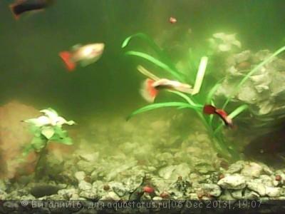 Цветение воды, зеленая вода, позеленела аквариум - Изображение_003[1].jpg