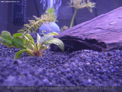 Коряга в аквариуме - CIMG5246[1].jpg
