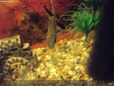 Белая точка на голове у акулий бала - DSC09343.JPG