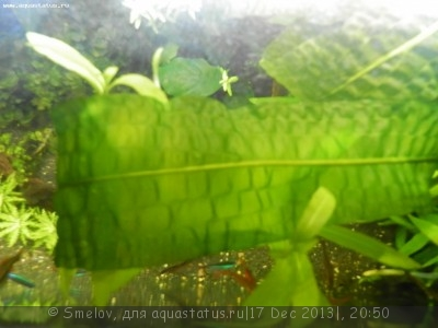 Мой аквариум 100 литров Smelov  - PC170684.JPG