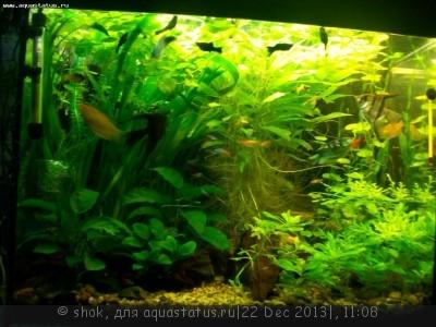 Фото аквариумов объемом от 101 до 250 литров - 110_8874.JPG