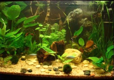 мой аквариум - Мой аква.jpg