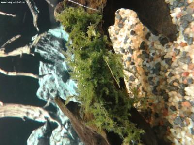 Аквариумные растения - опознание растений. - 20140103_222913.jpg