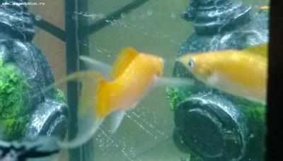 Помогите опознать рыбку опознание рыб  - WP_20140105_002-.jpg