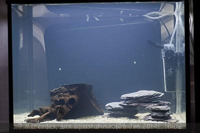 Мой любимый живой уголок - аквариум на 60 литров Mercedes  - _DSC0932.jpg