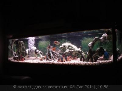 Боция Клоун в аквариуме. - DSC04074.jpg