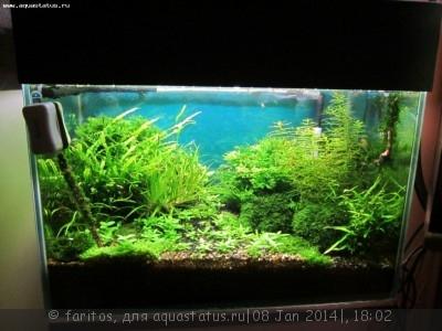 Фото аквариумов объемом от 31 до 100 литров - Изображение 021.jpg