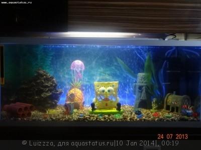 Фото аквариумов объемом от 31 до 100 литров - cPA7m0Cx67g.jpg
