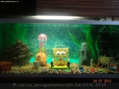 Фото аквариумов объемом от 31 до 100 литров - fisaeleVJBc.jpg