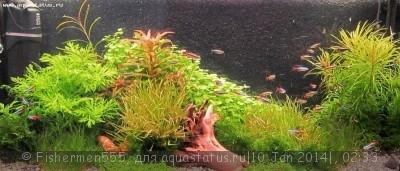 Фото аквариумов объемом от 31 до 100 литров - IMG_2913.jpg