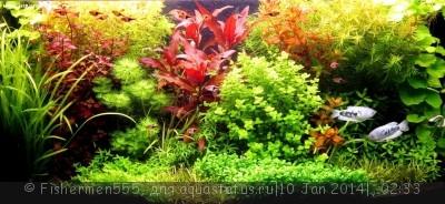 Фото аквариумов объемом от 31 до 100 литров - IMG_5873.jpg