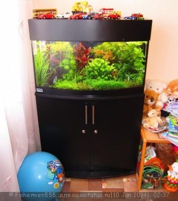 Фото аквариумов объемом от 31 до 100 литров - IMG_5790.jpg