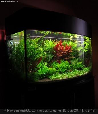 Фото аквариумов объемом от 31 до 100 литров - IMG_9599.jpg