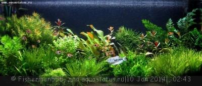 Фото аквариумов объемом от 31 до 100 литров - IMG_7200.jpg