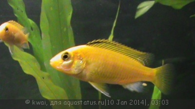Помогите опознать рыбку опознание рыб  - DSC00250.JPG
