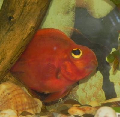 Чешется красный попугай - Изображение 8454.jpg