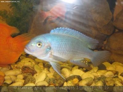 Помогите опознать рыбку опознание рыб  - Рыбы 014.jpg