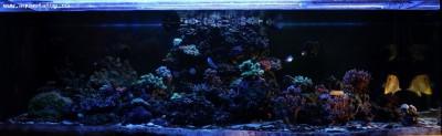 Фото аквариумов объемом свыше 401 литра - 0e2017b4b687.jpg