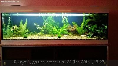Фото аквариумов объемом свыше 401 литра - WP_20140120_00120140120150629.jpg