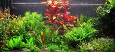 Фото аквариумов объемом от 31 до 100 литров - getImage.jpeg