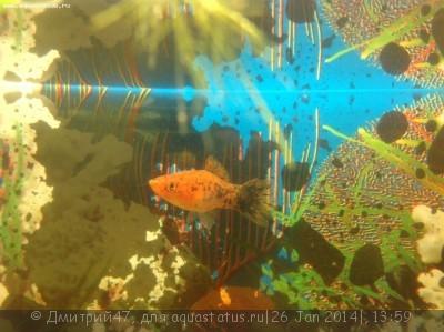 Помогите опознать рыбку опознание рыб  - IMG_0614.JPG