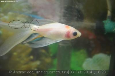 Затянутая рыба - что это? - DSC_0551.jpg