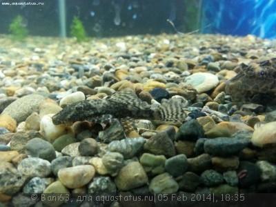 Помогите опознать рыбку опознание рыб  - 20140205_181755.jpg