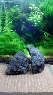 Камни лавы в аквариуме - IMG_20140207_082345.jpg