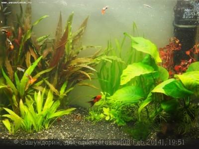 Новый вид старого аквариума 60 литров Сашундарин  - P2084017.JPG
