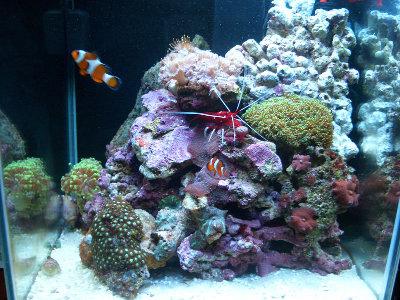 Морской мини аквариум 30 литров Roman  - CIMG0979.JPG