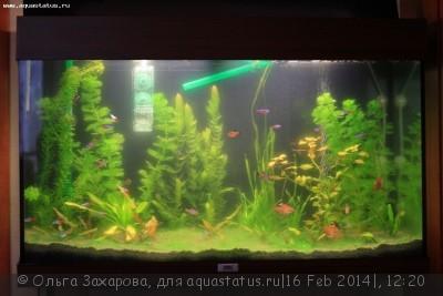 Мутная вода в аквариуме, муть в аквариуме - IMG_5478.JPG
