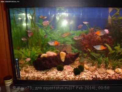 Коряга в аквариуме - DSC03015.JPG