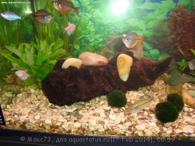 Коряга в аквариуме - DSC03016.JPG