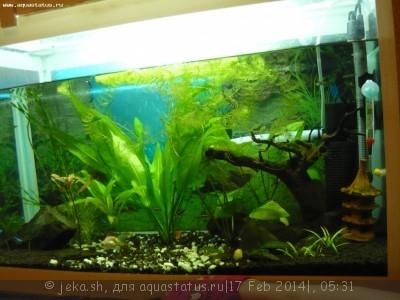 Коряга в аквариуме - P1200463.JPG