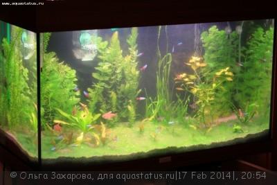 Мутная вода в аквариуме, муть в аквариуме - IMG_5585.JPG