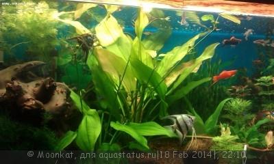 Опознание аквариумных растений - 01.jpg