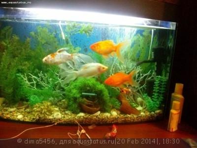 Помогите опознать рыбку опознание рыб  - CAM00117.jpg