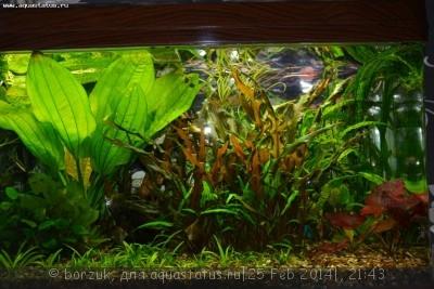 Помогите опознать рыбку опознание рыб  - DSC_0027.JPG