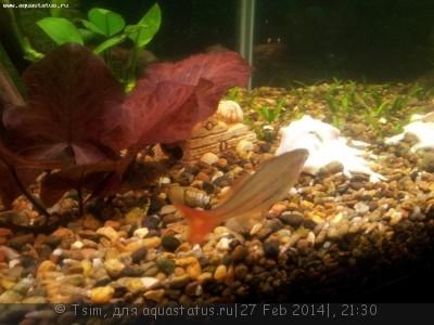Помогите опознать рыбку опознание рыб  - 20140228_002559.jpg