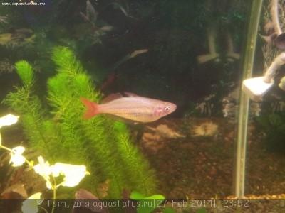 Помогите опознать рыбку опознание рыб  - 20140228_002639.jpg